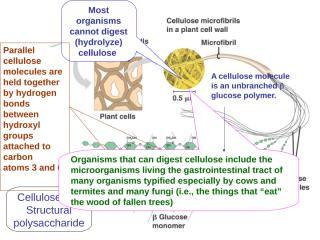 Lecture 4I pict cellulose  KKI LK.ppt